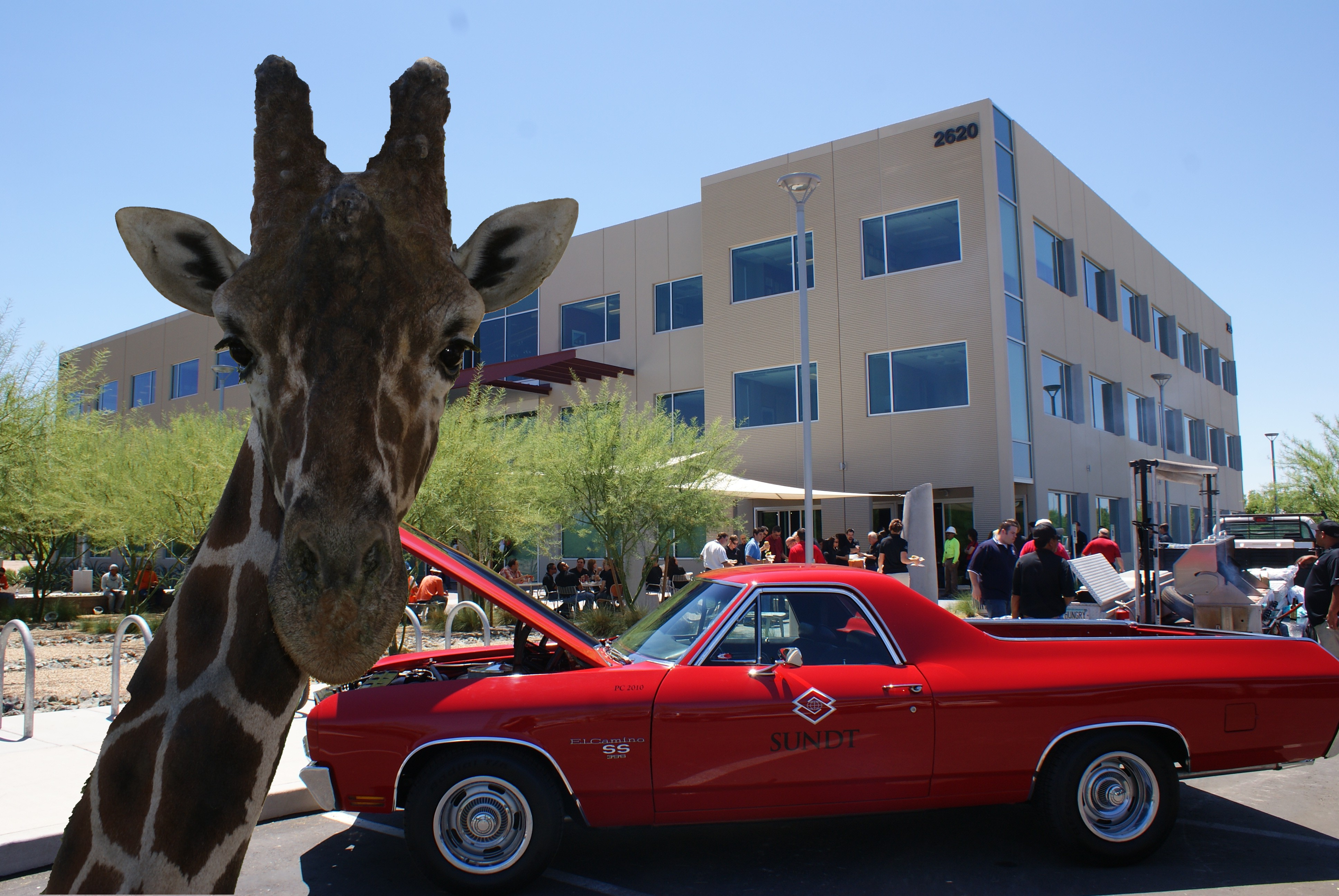 Giraffe at Sundt