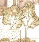 trees_orig